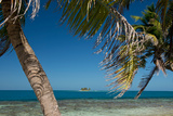 Silk Caye Island with Palm Trees, Caribbean Sea, Stann Creek District, Belize Photographic Print by Green Light Collection