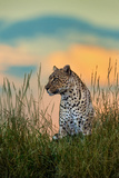 Leopard (Panthera Pardus), Serengeti National Park, Tanzania Photographic Print by Green Light Collection