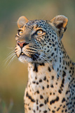 Close-Up of Leopard (Panthera Pardus), Serengeti National Park, Tanzania Photographic Print by Green Light Collection