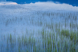 Water Grass, Eastern Iceland Photographic Print by Green Light Collection