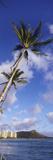 Palm Tree on the Beach, Diamond Head, Waikiki Beach, Honolulu, Oahu, Hawaii, Usa Fotografisk tryk af Panoramic Images