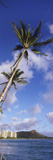 Palm Tree on the Beach, Diamond Head, Waikiki Beach, Honolulu, Oahu, Hawaii, Usa Photographic Print by Panoramic Images