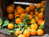 Oranges for Sale in the Souk, Fes, Morocco Photographic Print by Green Light Collection