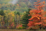 Colorful Trees and a Foggy Hillside in Acadia National Park Photographic Print by Darlyne Murawski