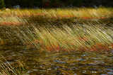 Windswept Rushes in Bubble Pond Photographic Print by Darlyne Murawski