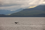 Among Mountains and Lush Hillsides, the Tail Fin of a Humpback Whale Breaches the Water Photographic Print by Eric Kruszewski