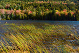 Windswept Rushes and Fall Foliage at Bubble Pond Photographic Print by Darlyne Murawski