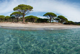 View of the Palombaggia Beach, Corsica, France Photographic Print by Green Light Collection