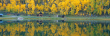 Autumn Aspens Along Route 550, North Durango, Colorado Photographic Print by Panoramic Images