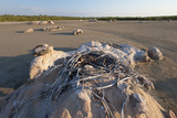 An Abandoned Osprey Nest on Top of a Rock in Vansisttart Bay, Western Australia Photographic Print by Jeff Mauritzen