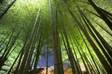 A Bamboo Forest in the Gardens of Kodai-Ji Photographic Print by Macduff Everton