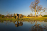 An African Elephant in Warm Sunlight by a Spillway Photographic Print by Beverly Joubert