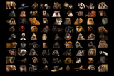 Composite of 90 Different Species of Primates Photographic Print by Joel Sartore