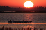 Silhouetted Brown Pelicans, Pelecanus Occidentalis, Resting at Sunset Photographic Print by Robbie George