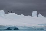 Adelie Penguins, Pygoscelis Adeliae, on an Iceberg Photographic Print by Cristina Mittermeier