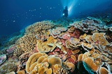 Healthy Coral Growth in the Southern Line Islands Photographic Print by Brian Skerry