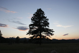 A Tree Silhouetted by the Sunset Photographic Print by Stacy Gold