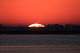 The Sun Setting Behind Trees on the Shore of the Chesapeake Bay Photographic Print by Robbie George