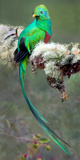 Resplendent Quetzal (Pharomachrus Mocinno), Savegre, Costa Rica Photographic Print by Panoramic Images