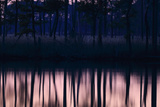 Reflections of Trees in Calm Water at Dawn Photographic Print by Robbie George
