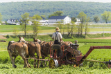A Farmer Mows a Field of Fresh Green Hay Using a Horse Drawn Mowing Machine Photographic Print by Richard Nowitz