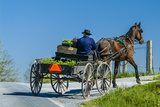 An Amish Man Rides in a Horse Carriage Driving to Leola Auction in Lancaster County, Pennsylvania Photographic Print by Richard Nowitz