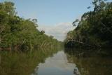 Cagan Sekercioglu - A Scenic View of a Coastal Mangrove Swamp in Northern Venezuela Fotografická reprodukce