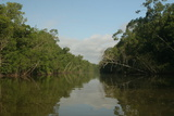 A Scenic View of a Coastal Mangrove Swamp in Northern Venezuela Photographic Print by Cagan Sekercioglu