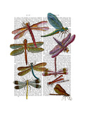 Dragonfly Print 3 Art by  Fab Funky