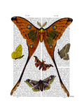 Moth Plate 1 Premium Giclee Print by  Fab Funky