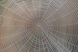 A Spider Web in a Wetland Pasture on a Central Florida Cattle Ranch in the Everglades Watershed Photographic Print by Carlton Ward