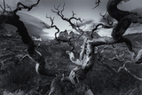 A Patagonia Scenic of the Andes Mountains, Weathered Dead Tree Branches, and Dramatic Clouds Reproduction photographique