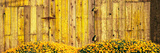 California Golden Poppies (Eschscholzia Californica) in Front of Weathered Wooden Barn Photographic Print by Panoramic Images