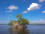 Mangroves Near Whitewater Bay, Everglades National Park, Florida Photographic Print by Carlton Ward