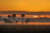 Sunrise Behind Fog, Palms and Sawgrass Wetlands in Big Cypress National Preserve Photographic Print by Carlton Ward