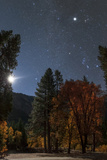 A Moonlit Autumn Night with Orion over Aspen Trees. Higher Up Is Planet Jupiter, in Taurus Photographic Print by Babak Tafreshi