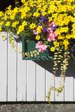 A Window Box Filled with Cascades of Flowers Photographic Print by Gabby Salazar