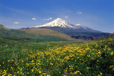 A Meadow of Wildflowers in Spring, with Mount Damavand, Alborz Mountains in the Distance Photographic Print by Babak Tafreshi