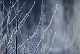 Frost on Bushes on a Cold December Morning Photographic Print by Jak Wonderly