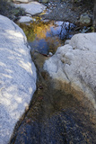 Stream in the Cochise Stronghold in the Dragoon Mountains Photographic Print by Scott Warren