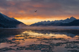 A Bald Eagle, Haliaeetus Leucocephalus, Flies over an Icing Chilkat River at Dawn Photographic Print by Jak Wonderly