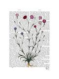 Italian Carnation 5 Prints by  Fab Funky