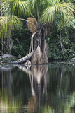 Palm Swamp, known as an Aguajal in Peru Photographic Print by Gabby Salazar