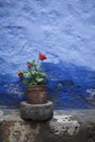 A Colorful Blue Wall and a Red Geranium in a Pot Inside the Santa Catalina Monastery Photographic Print by Gabby Salazar