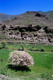 A Tree in Bloom in the Alborz Mountains Photographic Print by Babak Tafreshi