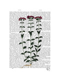 Italian Carnation 6 Posters by  Fab Funky