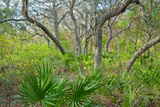 Twisted Oaks and Palmettos Cover an Elevated Sand Ridge Photographic Print by Carlton Ward