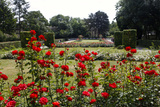The Rose Garden on Petrin Hill Photographic Print by Jill Schneider