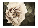 Golden Era Peony I Premium Giclee Print by Rachel Perry