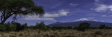 A Moonlit Night with Mount Kilimanjaro, an Acacia Tree, and Giraffes in the Background Fotografisk tryk af Babak Tafreshi